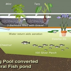 Convert-Swimming-Pool-Aquaculture-feat000