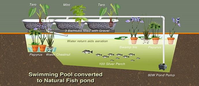 تحويل حوض السباحة لتربية ونمو الأسماك موقع الزراعة