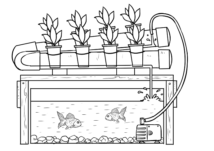 What-is-Aquaponics-and-How-Does-it-Work-03