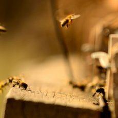 Bee stocks in Spring