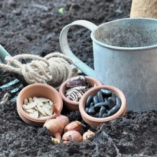 seeds in pot with gardening tools placed on soil to sowing