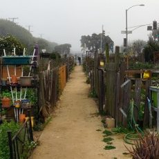 Community Garden in  Santa Monica, California with Marine layer fogging in the garden.
