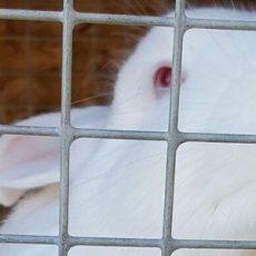 raising-rabbits-feat00