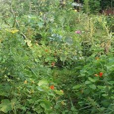 Growing-Perennials-00