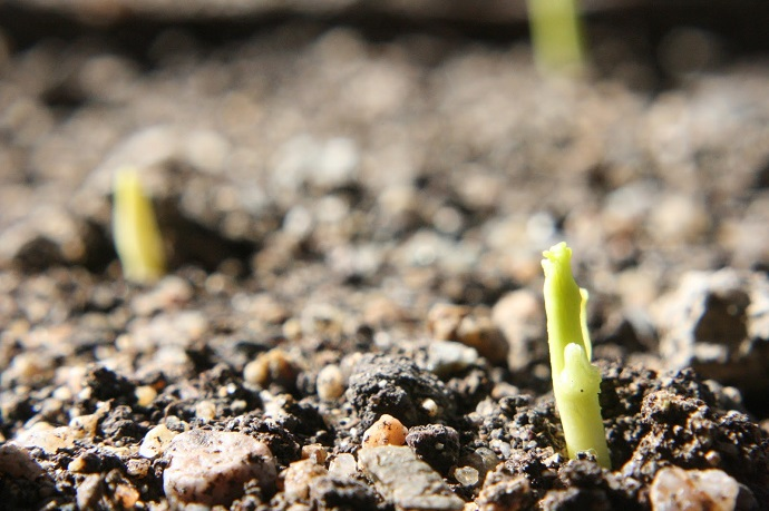 Seed-Germination-03